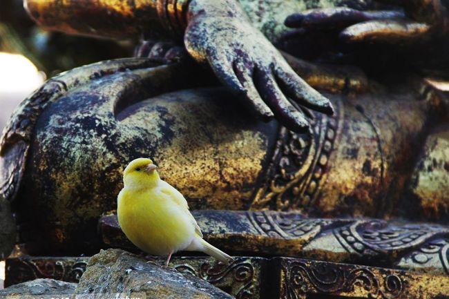 spiritual bird Animal Themes Animal Wildlife Animals In The Wild Bird Close-up Day Nature No People One Animal Outdoors Perching Wildlife