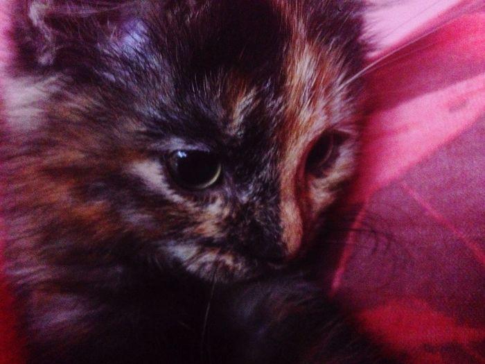 Khimi Love Cutest Kitten First Eyeem Photo