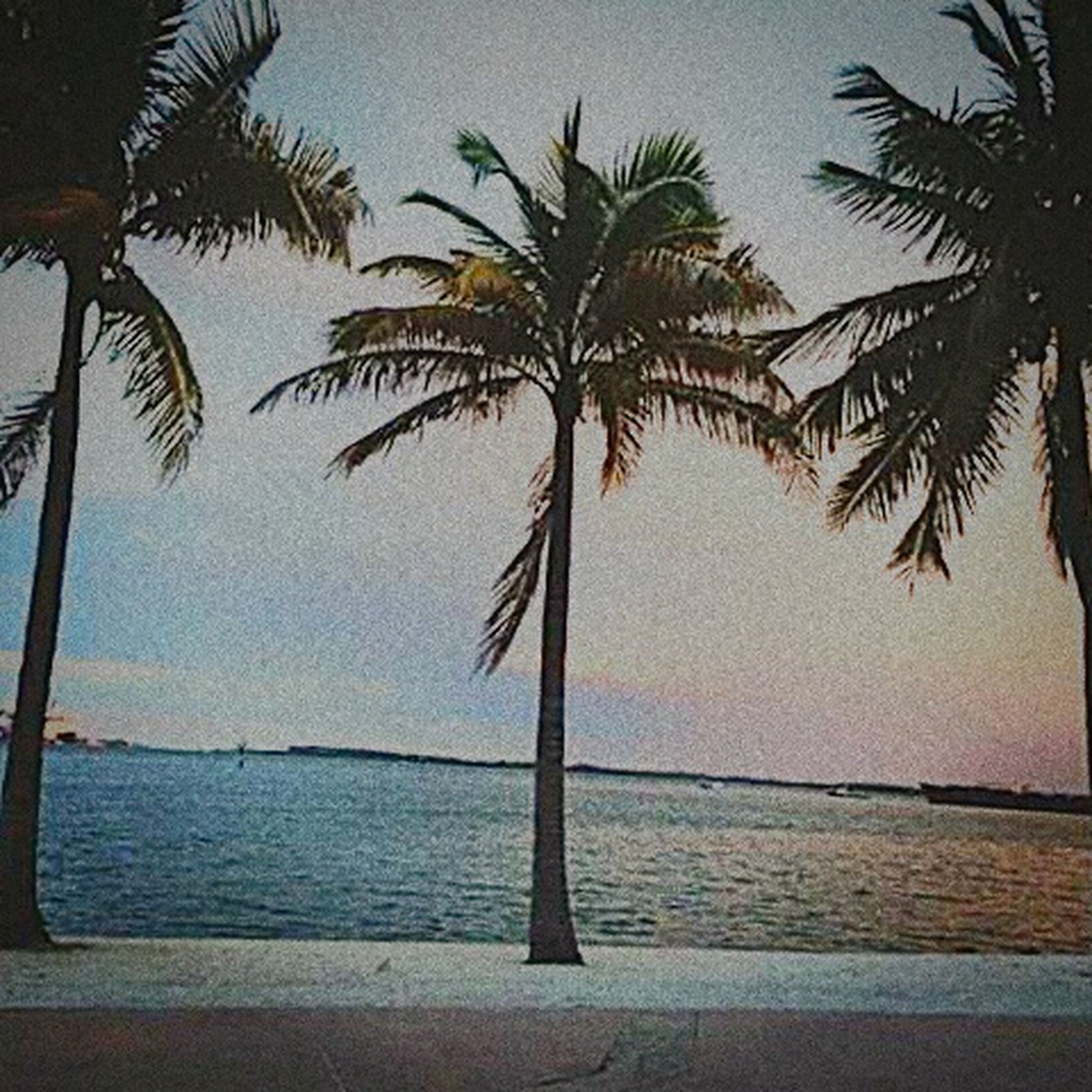 palm tree, sea, water, tree, beach, horizon over water, tranquility, tranquil scene, tree trunk, scenics, nature, beauty in nature, shore, sky, coconut palm tree, growth, idyllic, tropical climate, sand, outdoors