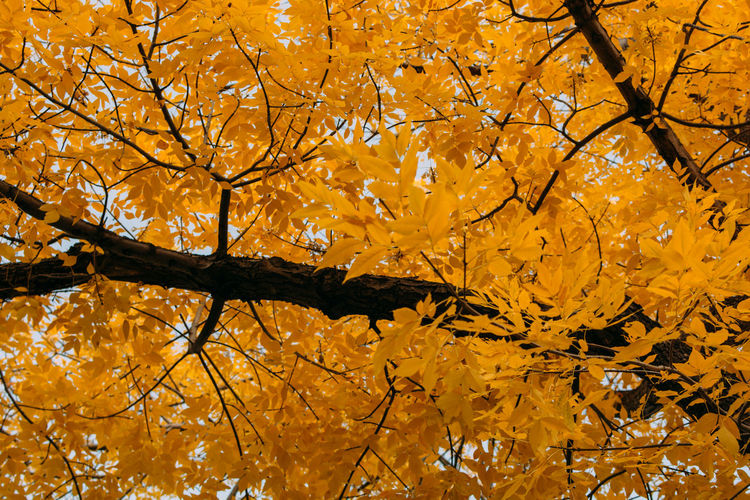 Low angle view of autumnal tree