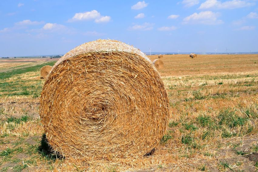Abundance Agriculture Bale  Balledifieno Basilicata, Italy  Beauty In Nature Circle Cloud - Sky Cultivated Land Farm Field Grassy Harvesting Hay Horizon Over Land Landscape Nature Rural Scene Scenics Sky Solitude Summer Tranquil Scene Tranquility Travel Destinations