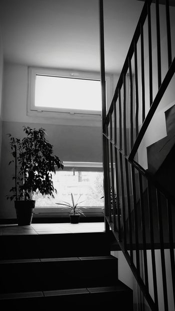 Window Indoors  Home Interior Staircase Architecture No People Luxury Day Modern Tree Water Nature Spiral Staircase