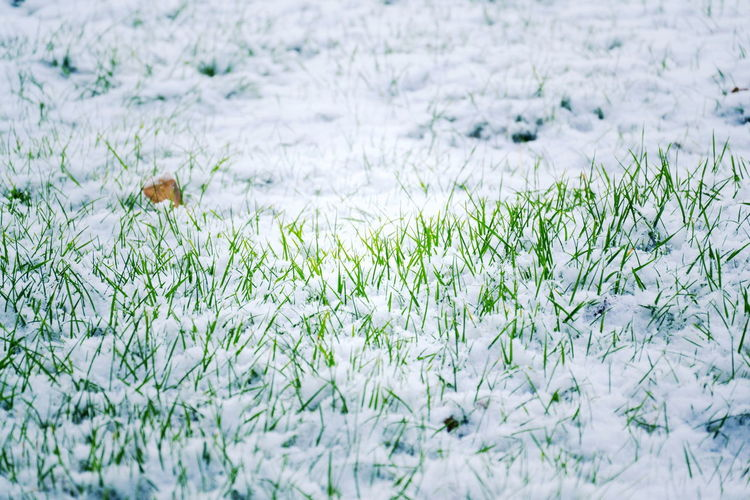 Plants growing on field during winter