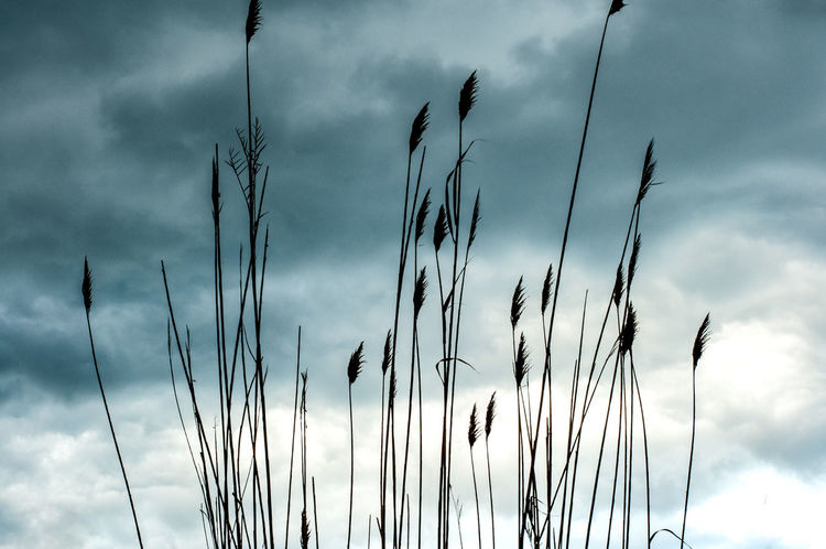 Cloudy Day Cloudy Sky Nature Nature Photography Plants Beauty In Nature Cloud - Sky Growth Low Angle View Overcast Scenics - Nature Stalk Tranquil Scene Tranquility