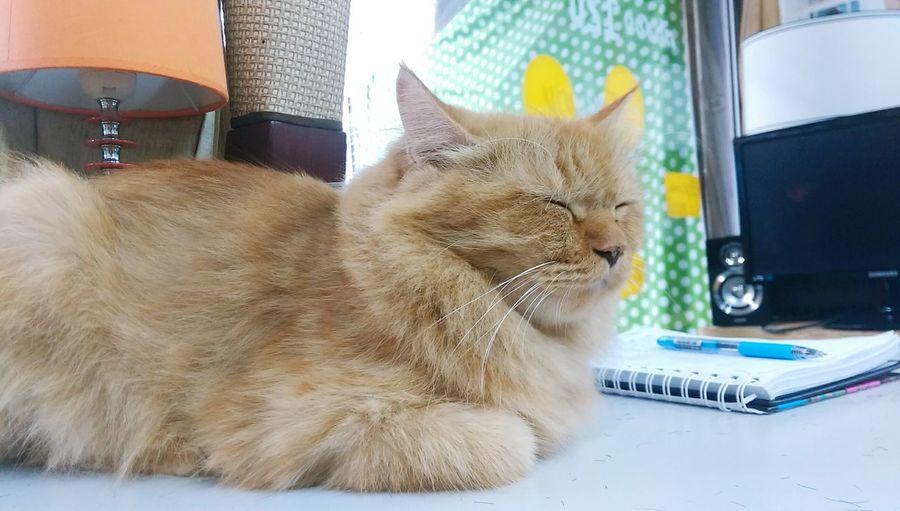 แมวหลับจ้า Hi! Cheese! Enjoying Life Hahahaha 😂😂😂😂😂 Relaxing Today แมวหลับจ้าสบายเลยนะมึง