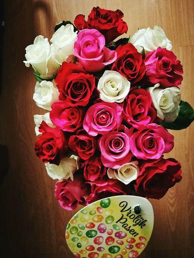 Flower Rose - Flower Red Pink Color Day With Love ✌️❤️ Love♥ My Boyfriend ❤ Best Boyfriend ❤️❤️❤️💋💋💋💋❤️❤️❤️