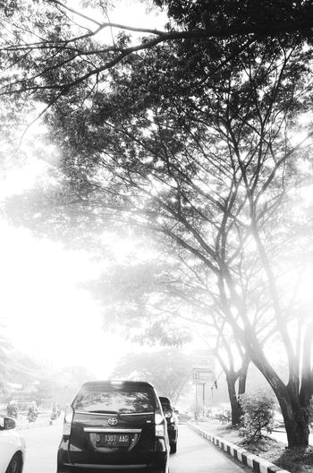 Cars on road by trees in city against sky
