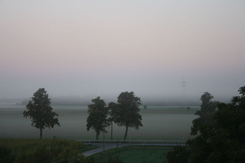 Trees Wether Beauty In Nature Day Foggy Morning Landscape Nature No People Outdoors