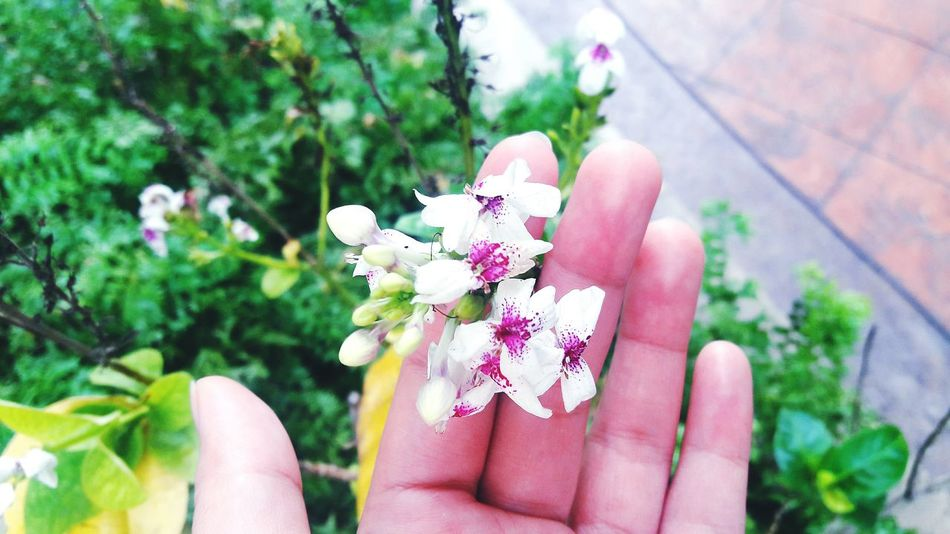 EyeEm Selects Human Body Part Human Hand Flower One Person Outdoors People Day Only Women Holding One Woman Only Focus On Foreground Adult Nature Close-up Plant Adults Only Fragility Freshness