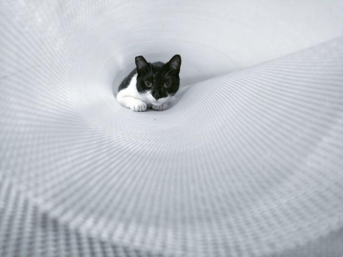 Close-Up Portrait Of Cat Hiding In White Mat