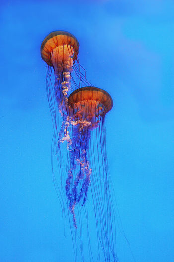 Beauty In Nature Couples Illuminated Jelly Fish Low Angle View Nature Water