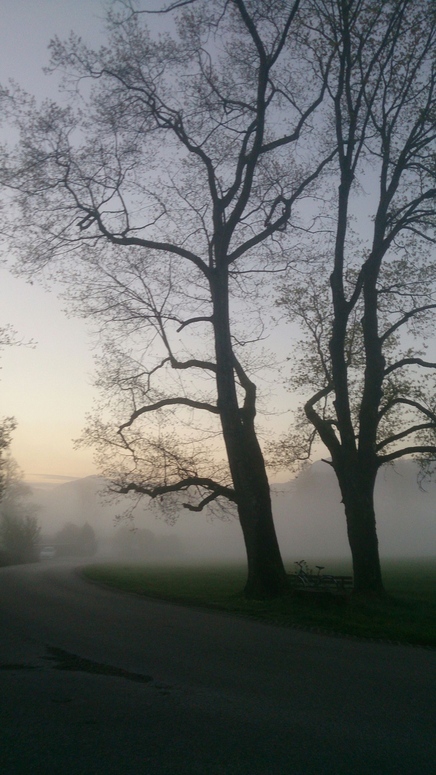 tree, bare tree, tranquility, tranquil scene, branch, silhouette, nature, landscape, beauty in nature, scenics, fog, field, tree trunk, growth, sky, non-urban scene, no people, outdoors, road, solitude