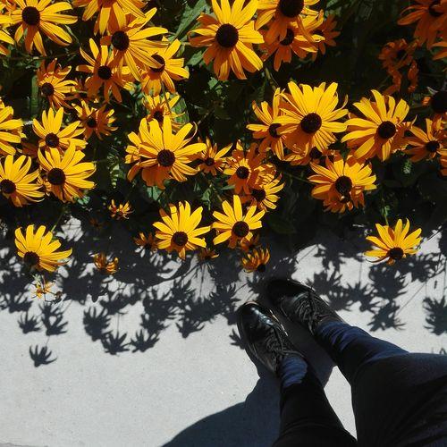 Feet Summer Shoes Flower Sunflower Leaf Shoe Shadow Sunlight Elegant Blooming Plant Petal Close-up Human Feet Flat Shoe Flower Head Human Foot Low Section Personal Perspective Black-eyed Susan Rudbeckia Hirta The Minimalist - 2019 EyeEm Awards The Mobile Photographer - 2019 EyeEm Awards
