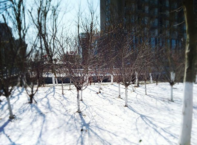PhonePhotography Good Wether On The Road Relax Snow ❄ Snowing Life Nature Trees