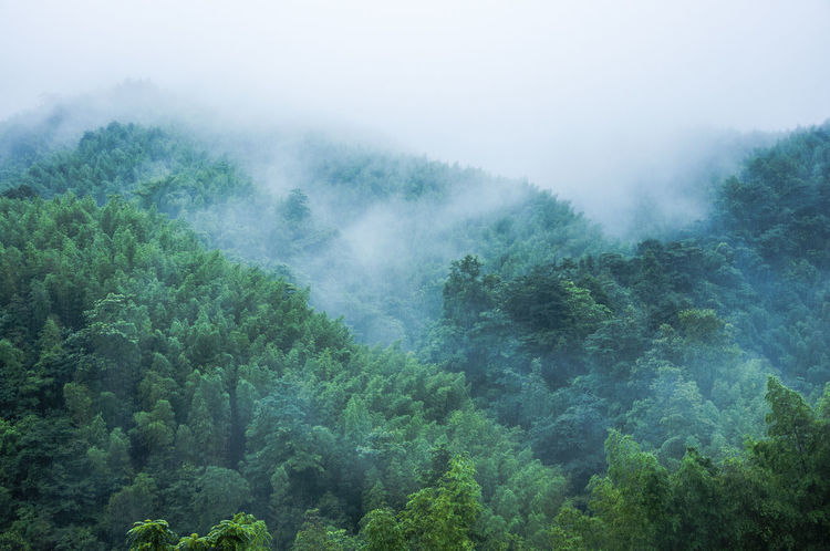 Beautiful forest and mountains scenery in mist Asian  Country Green Natural Beauty Nature Rain Trees Weather Adventure Beauty In Nature Countryside Fog Forest Green Hills Mist Moutnains Nature No People Outdoors Picturesque Scenery Scenics Sky Travel Destinations Tree