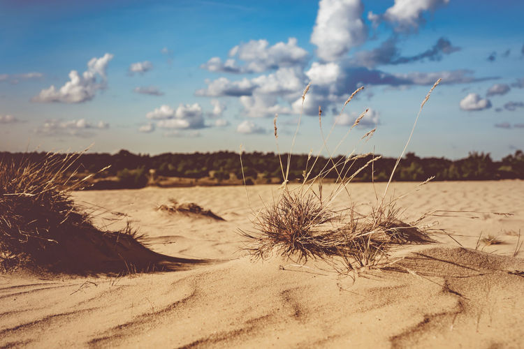 Arid Climate Beach Beauty In Nature Climate Cloud - Sky Day Desert Environment Focus On Foreground Land Landscape Marram Grass Nature No People Non-urban Scene Outdoors Plant Sand Scenics - Nature Sky Sunlight Tranquil Scene Tranquility