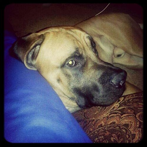 my pup pup!:) First Eyeem Photo