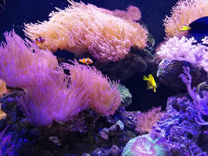 Reef Corel Underwater Close-up Sea
