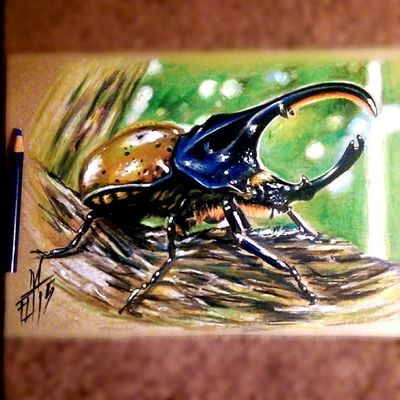 Drawing of a rhinoceros beetle Rhinocerosbeetle Instagram Mrttattoo Fullcustomtattoo Check This Out Tattooartist  Freehand Drawing Torstenmatthes Tattoo