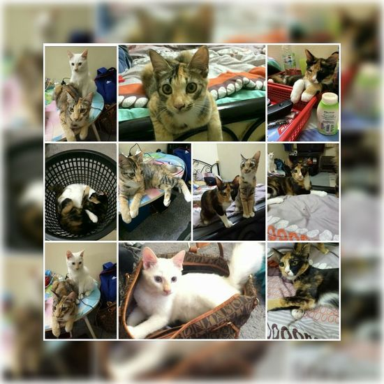 multiple pictures of cat for cat lover I Love My Cat EyeEm Selects Pets Animal Domestic Animals Cute Animal Themes
