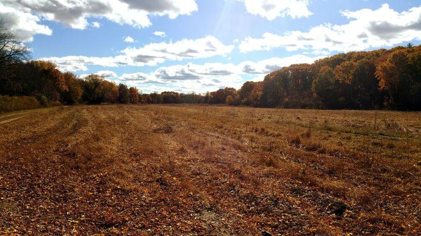 Fall In New England Fall Beauty Massachusetts Empty Field