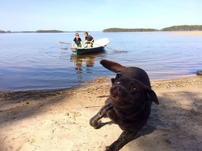 Labrador Retriever Hi! Beach Crazydog Beachmoments Cheese!