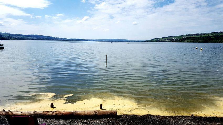 Switzerland Sempachersee Home Sweet Home Silent Moment Blütenstaub Im Wasser
