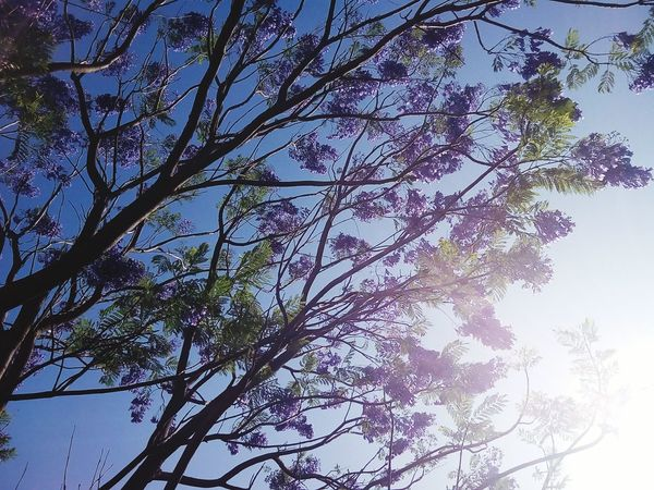Low Angle View Tree Sky Growth Nature No People Branch Outdoors Beauty In Nature Day EyeEm Freshness Dawn Purple Flowers