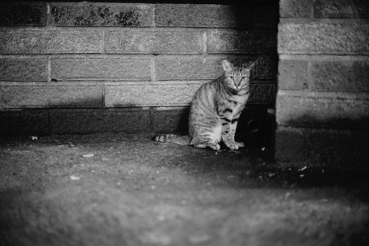 Stray Cat Neko