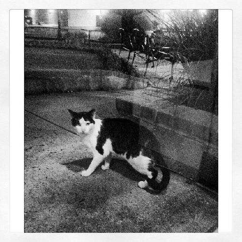 Li Random Cat Stray findmeahome MeoW chilling stillstandingthere