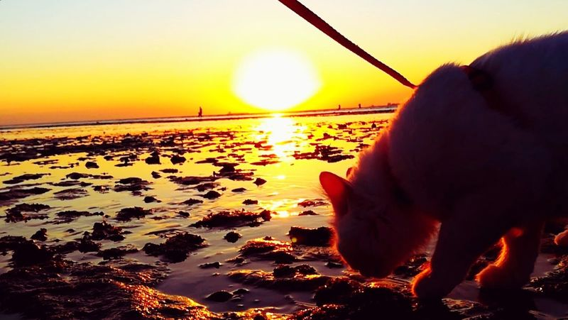 Domestic Animals Domestic Cat Domestic Cat Cat Walking Cat On The Sea Cat On The Beach Cat On Water Mylovelycat❤ Cats Of EyeEm Pets Sea Water One Animal Beach Nature Sea And Rocks Outdoors Close-up Animal Themes Cat Of EyeEm Day Sky Sky And Sea Beach Time Nature Cat Photography Totssy 😍