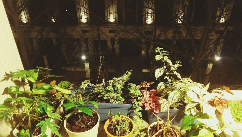我的小陽台小花園
