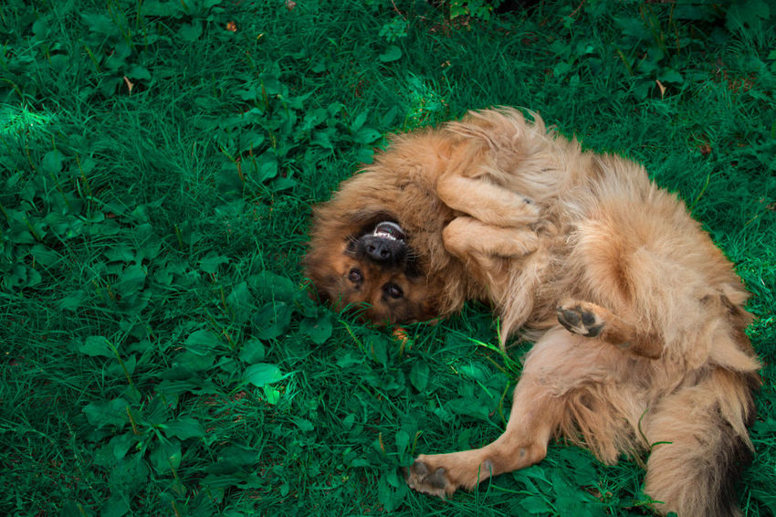 Crazy Dog Crazy Face Animal Themes Close-up Crazy Dog Day Daylight Dog Domestic Animals Grass Green Color Mammal Nature No People One Animal Outdoors Pets