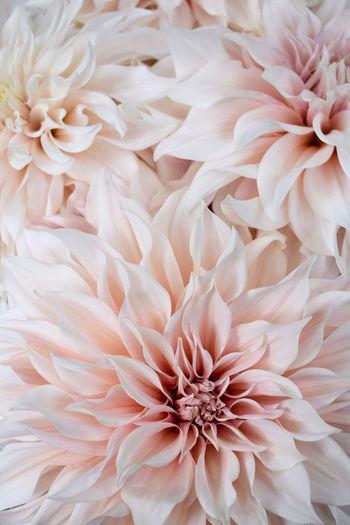 Full frame shot of white flower