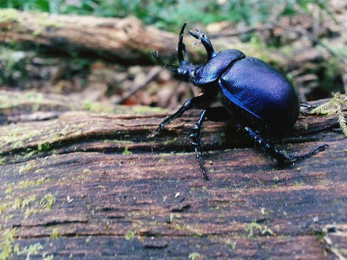One Animal Animal Themes Animals In The Wild Insect Close-up Wildlife Animal Wildlife Outdoors No People Nature Day