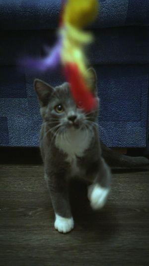 кот Cat Pet Photography  котэ