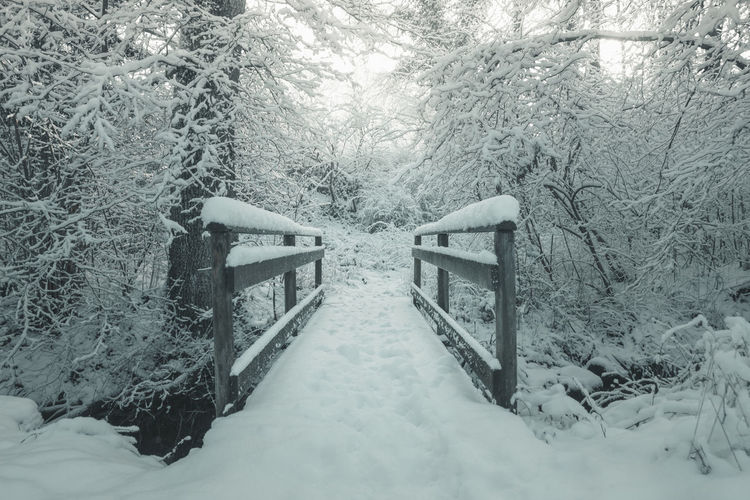 snow covered wooden bridge with foot steps in front of forest in the winter season Bridge Snow Winter Winter Mood Winter Magic Forest Foot Steps Snow Covered Perspective Wooden Stream Scenics - Nature Covering Branches Snowy Light Winter Season Nature Path Environment vanishing point Winter Wonderland