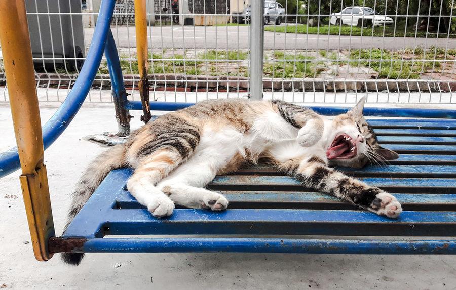 Meow🐱 Sleepy Cat 😂😂✌✌ Mycat❤ Tired Cat look like a devil😂😂