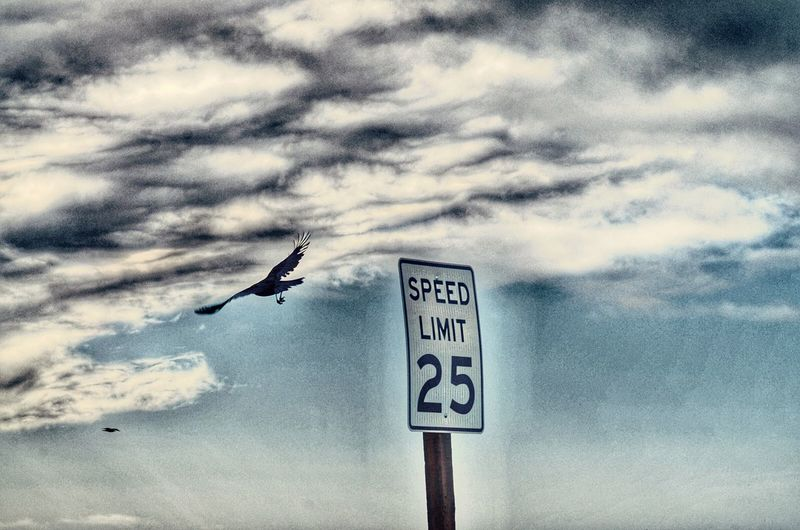 Animal Themes Animals In The Wild Communication Bird One Animal Cloud - Sky Text Animal Wildlife Sky Flying Guidance No People Road Sign Day Low Angle View Outdoors Seagull Raven - Bird Nature Spread Wings California Eye4photography  EyeEm Birds Birds_collection