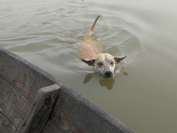 High angle view of dog in the lake