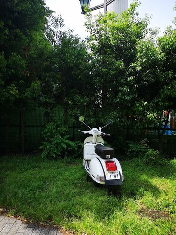 Vespa Architecture Car City Day Field Grass Green Color Growth Land Land Vehicle Mode Of Transportation Motor Vehicle Nature No People Outdoors Plant Road Text Transportation Tree