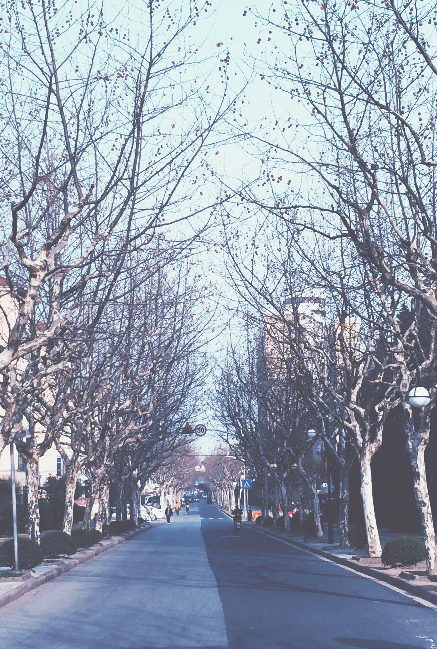 the way forward, tree, transportation, road, diminishing perspective, vanishing point, treelined, bare tree, road marking, street, branch, empty road, empty, sky, in a row, long, car, outdoors, nature, day
