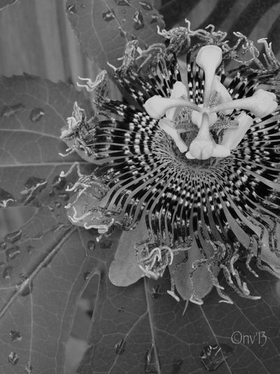 Nature_collection Eye4photography  Bw_collection EyeEm Nature Lover