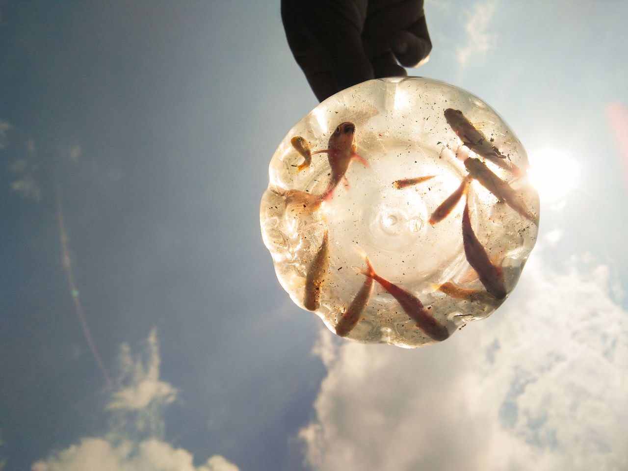 Cropped Image Of Person Carrying Goldfish In Container Against Sky