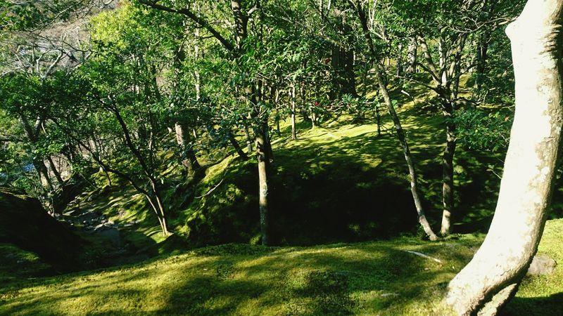 Moss Gleen Sunshine Trees Hill Natutre Trip Photo