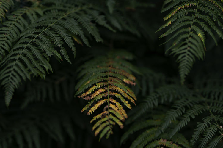 The first fern loses its green color, slight sharpness, soft beautiful bokeh