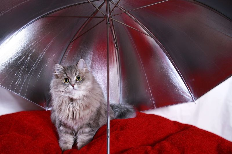 Cat Sitting Below Umbrella