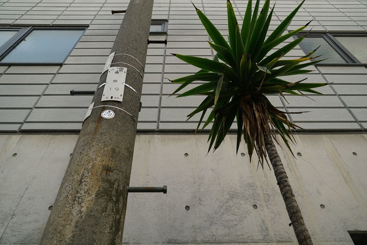 Low angle view of plant against building