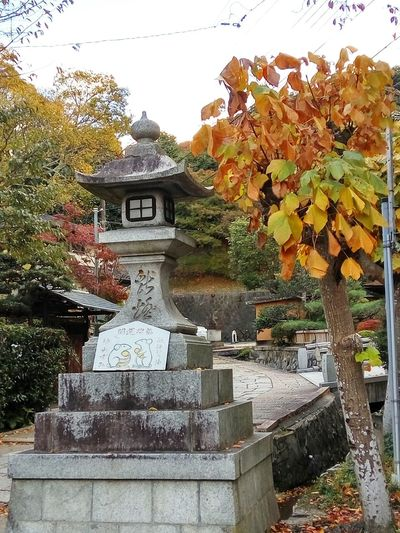 Japan kyoto paved path yellow japanese outdoor lamp Japanese outdoor lights Autumn c Japanese Stone Lantern 石灯籠 Japan Kyoto Paved Path Yellow Japanese Outdoor Lamp Japanese Outdoor Lights Autumn Leaves Philosopher's Path Strength Mouse Together Nature Spirituality Religion Day Tree Outdoors Statue Plant Beauty In Nature Sky No People
