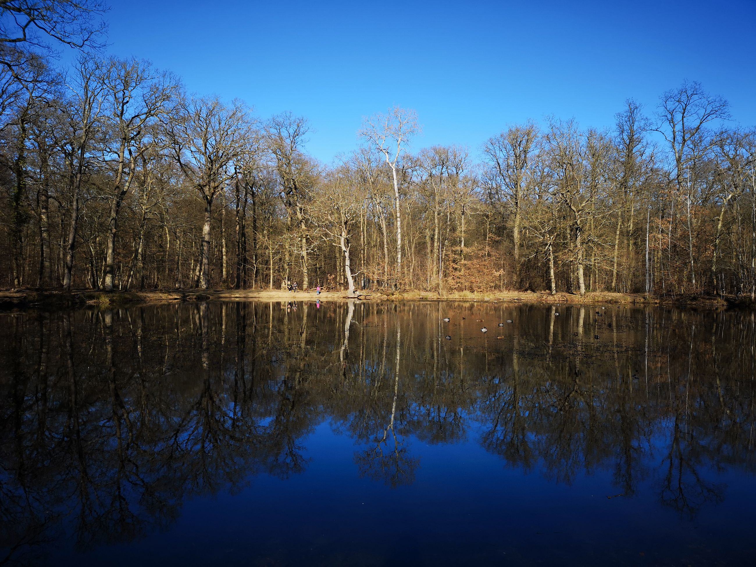 reflection, water, tree, tranquility, sky, lake, plant, beauty in nature, tranquil scene, scenics - nature, nature, waterfront, no people, non-urban scene, blue, bare tree, day, clear sky, forest, outdoors, swamp, reflection lake
